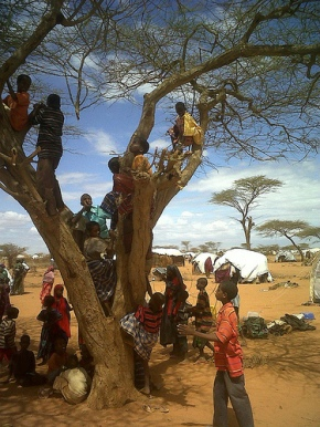Children climbing in a tree in east Kenya despite the challenges and hardships they face in the Dadaab refugee camps.
